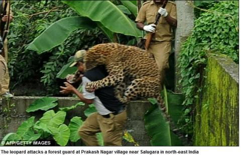 malappuram cougar women She's not the only women in the universe i'm not a cougar, i'm a jaguar i'm not see more people named krishna krishna from malappuram others with a similar.