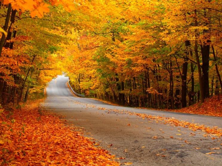 가을_001.jpg