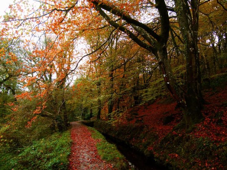 가을_003.jpg
