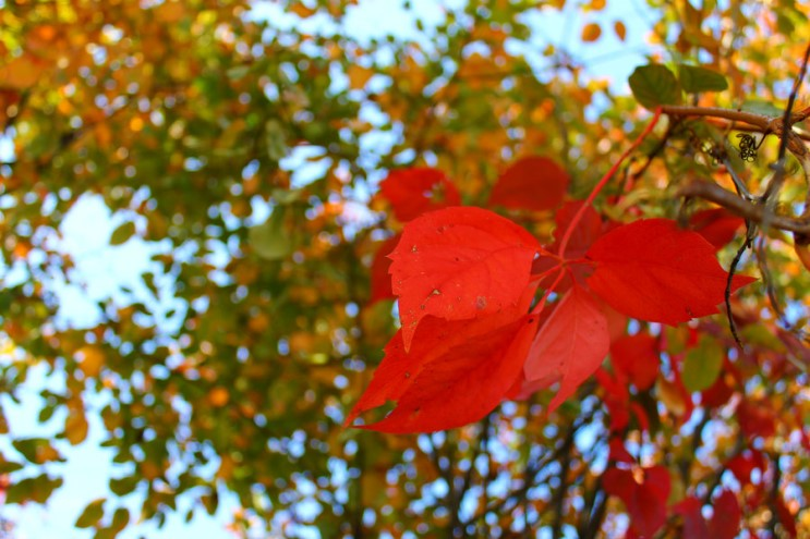 가을_007.jpg
