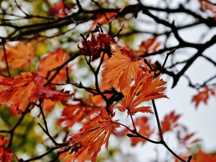 가을_024.jpg