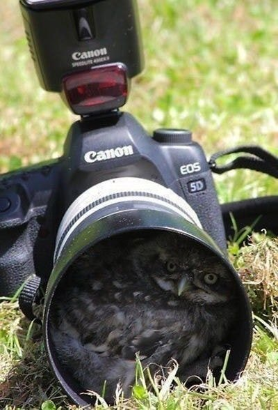 귀여운 야생동물과 사진찍기 28.jpg