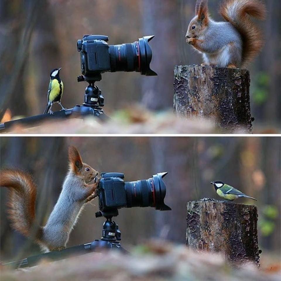 귀여운 야생동물과 사진찍기 7.jpg