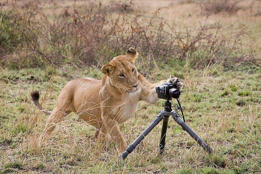 귀여운 야생동물과 사진찍기 22.jpg