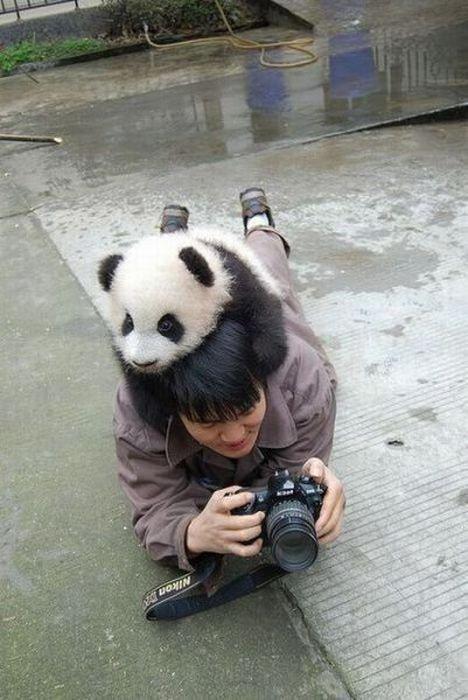귀여운 야생동물과 사진찍기 18.jpg