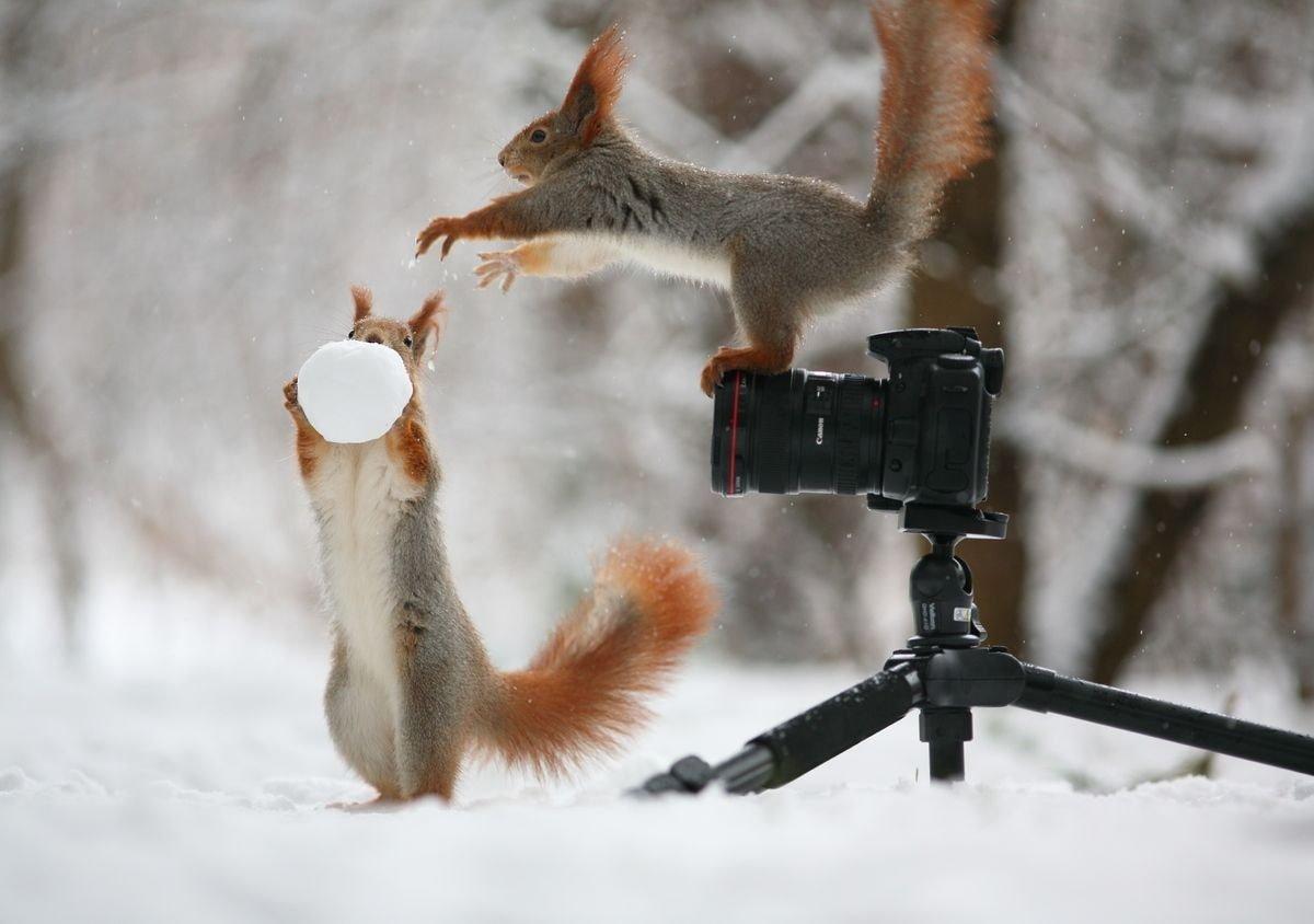 귀여운 야생동물과 사진찍기 6.jpg
