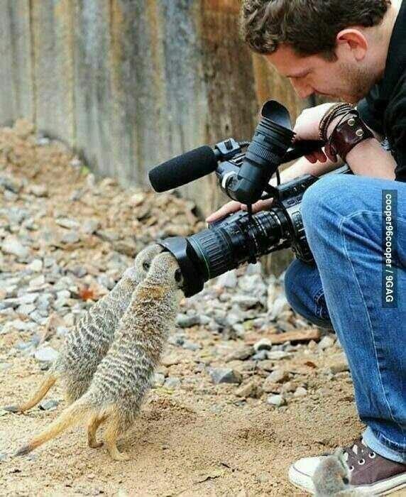 귀여운 야생동물과 사진찍기 31.jpg