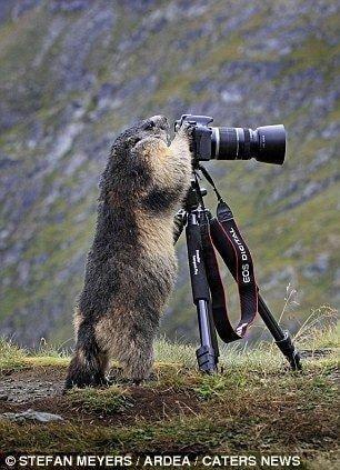 귀여운 야생동물과 사진찍기 26.jpg