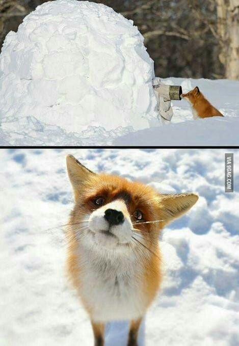 귀여운 야생동물과 사진찍기 2.jpg