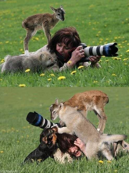 귀여운 야생동물과 사진찍기 4.jpg