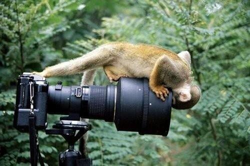 귀여운 야생동물과 사진찍기 33.jpg
