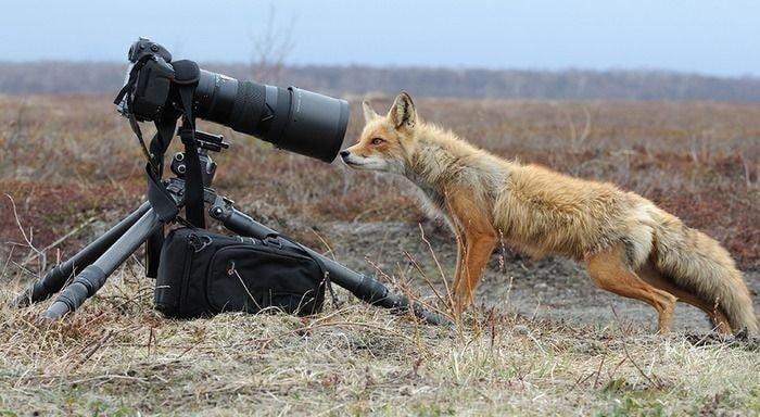 귀여운 야생동물과 사진찍기 1.jpg