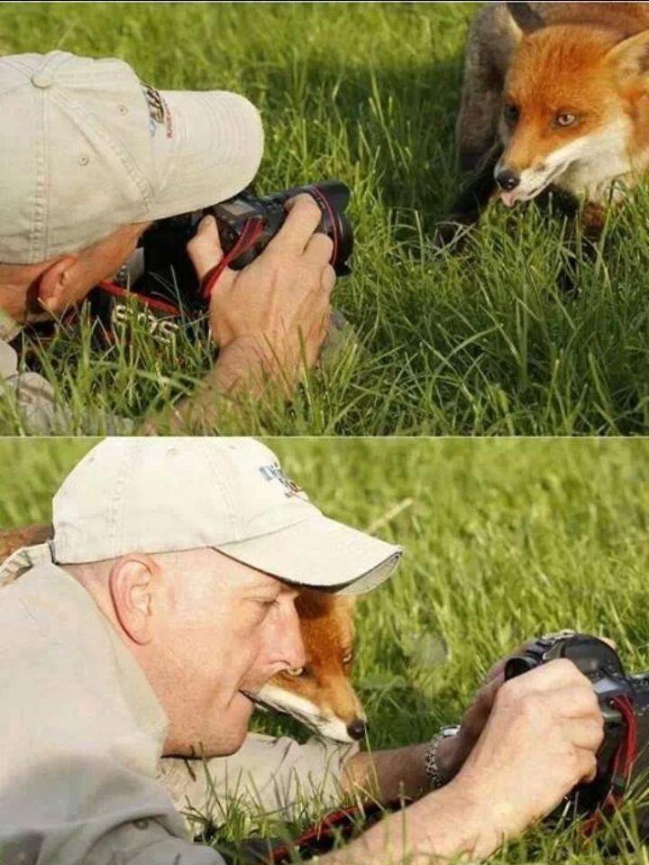 귀여운 야생동물과 사진찍기 3.jpg