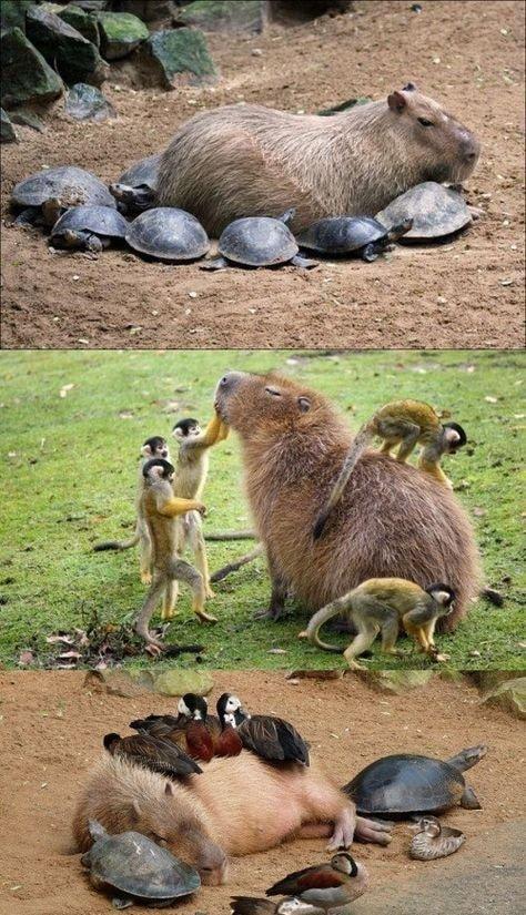귀여운 야생동물과 사진찍기 11.jpg