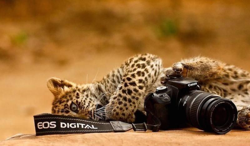 귀여운 야생동물과 사진찍기 30.jpg