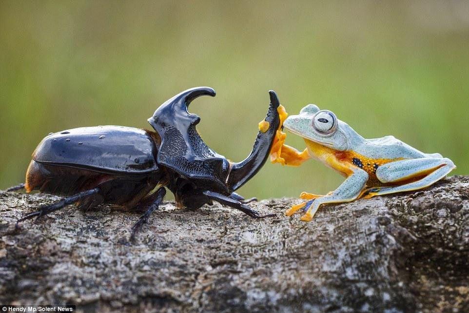 붕붕카 생겨서 완전 신난 개구리 1.jpg